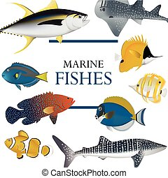 fish, コレクション, トロピカル, ベクトル, イラスト, 海洋