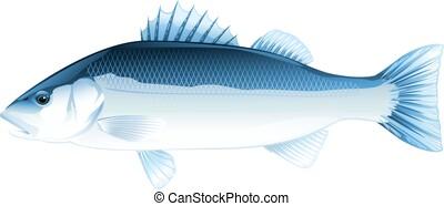 fish, ベース, 海