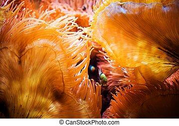 fish, 以及, the, 珊瑚礁