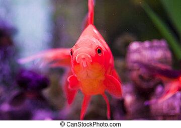 fish, 在, an, 水族館