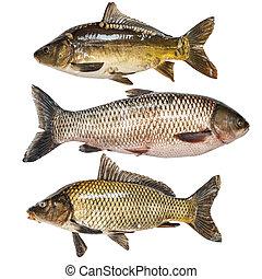 fish, 彙整