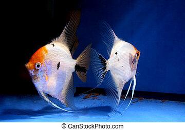 fish, 恋人
