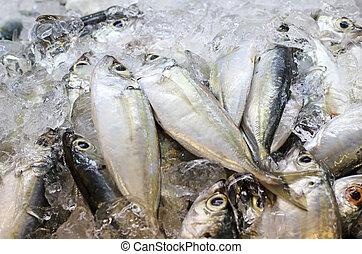fish, 新鮮なシーフード, 市場