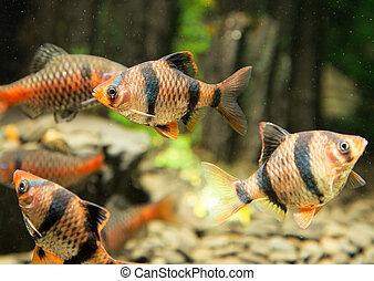 fish, 水族館