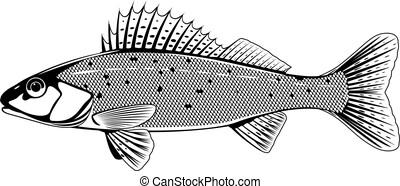 fish, 白, ruffe, 黒