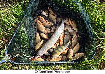 fish, 草, landing-net