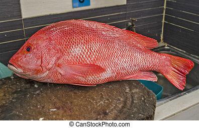 fish, 赤, snipper