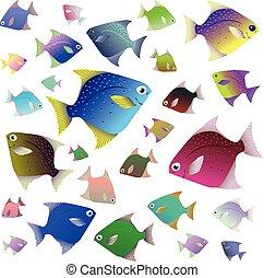 fish, 隔離された, コレクション, トロピカル, 背景, 白