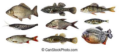 fish, 集合, 被隔离, 彙整
