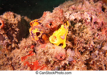 fish, 黄色, カエル