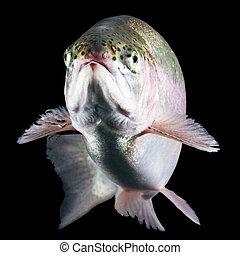 fish, 고립된, 송어