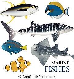 fish-02, 01, 海洋