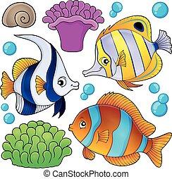 fish, 3, zbiór, temat, rafa, koral