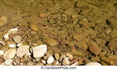 fish ablet in clear water - Alburnus feeding at rocky shore....