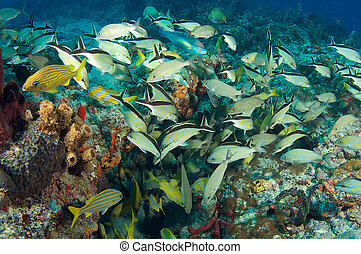 Fish Aggregation over a coral reef.