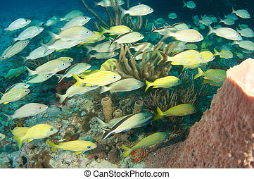 Fish aggregation over a reef in south Florida.