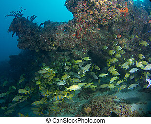 Fish aggregation under a reef ledge.