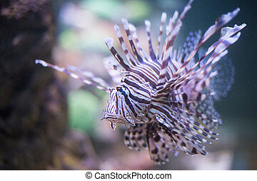 Fish air in a water fishtank