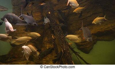fish, akwarium, publiczność