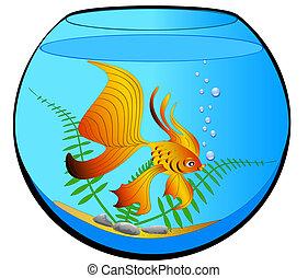 fish, akwarium, złoty, glony