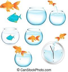 Fish And Aquariums