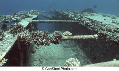 Fish and coral near shipwrecks Salem Express underwater in...