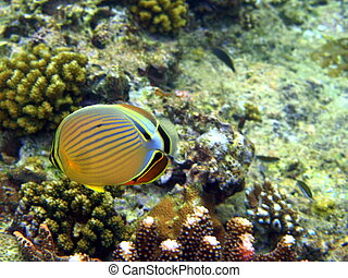 Fish and coral of many colours.
