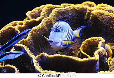 Fish and coral of the Red Sea