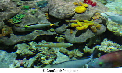 fish and corals in shallow
