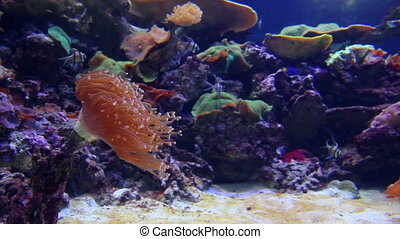 fish and corals underwater
