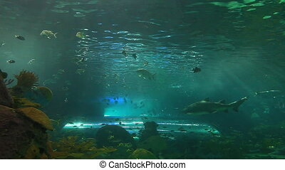 A close view of schools of fish and sharks drifting in a sun-drenched coral reef