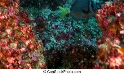 Fish angel butterfly underwater lagoon of ocean on...