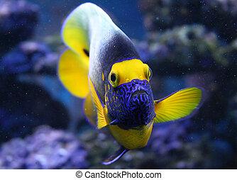 Fish - Aquarium fish