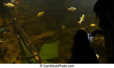 fish, aquarium, gens, regarder
