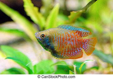 fish, aquarium, or