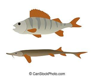 Fish Aquatic Marine Animals Vector Illustration - Fish...