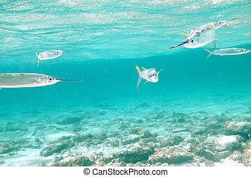 fish, attaque