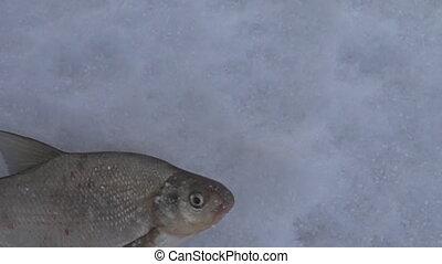 fish, attrapé, glace hiver, sous