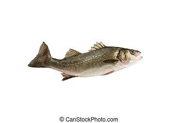 fish, basse, mer