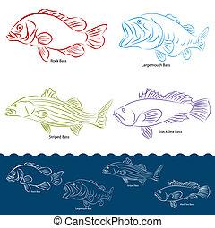 fish, basse, types