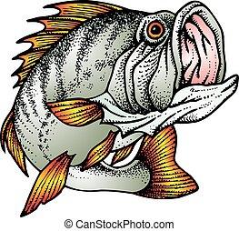 fish, blackback