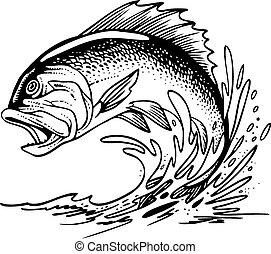 fish, blackback, isolé