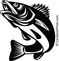 fish, blanc, walleye, sauter, retro, isolé, noir