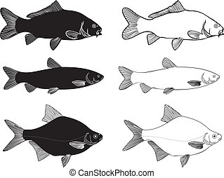 Fish - Carp, Grass carp, Bream high - Black and white vector...