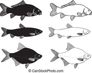 Fish - Carp, Grass carp, Bream high - Black and white vector...