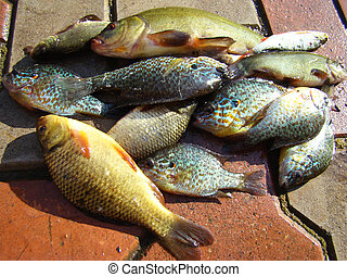 fish caught in the river