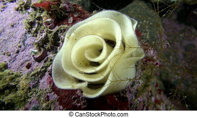 Fish caviar in the form of a rose underwater on seabed of...