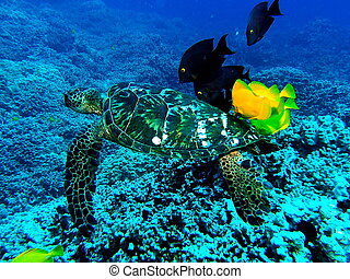 Fish cleaning turtle