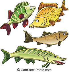 Fish Collection - cartoon illustration of freshwater fish