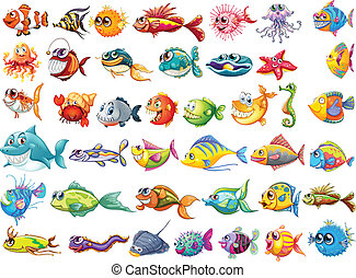 fish, collection